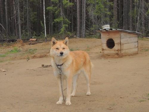 Вторую свою собаку хозяину удалось спасти.