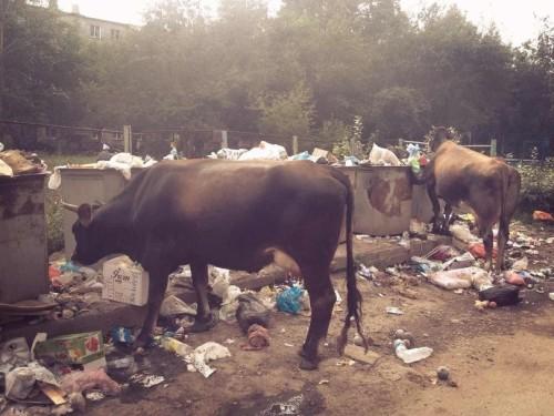 пиздец-животные-быдлоград-песочница-913562
