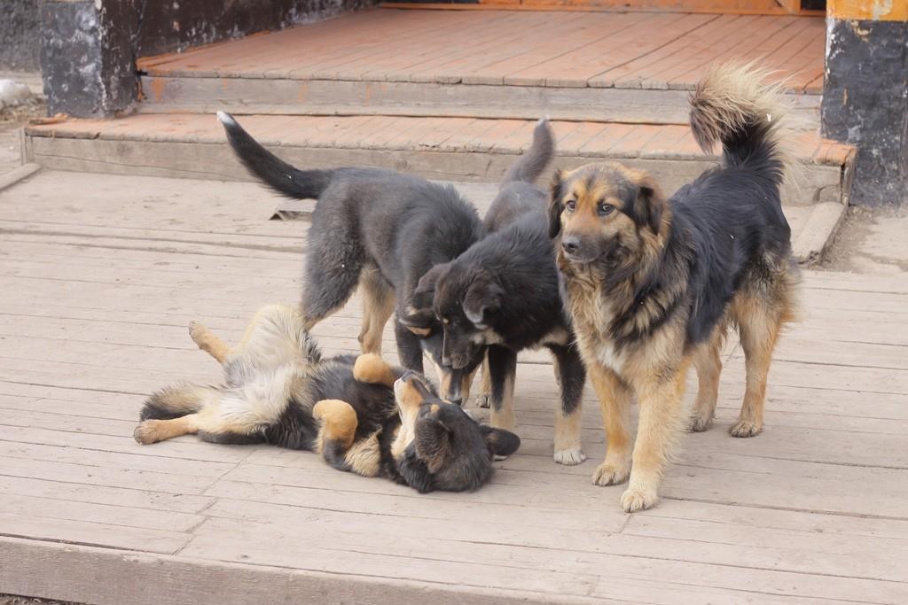 IMG_7079 собаки