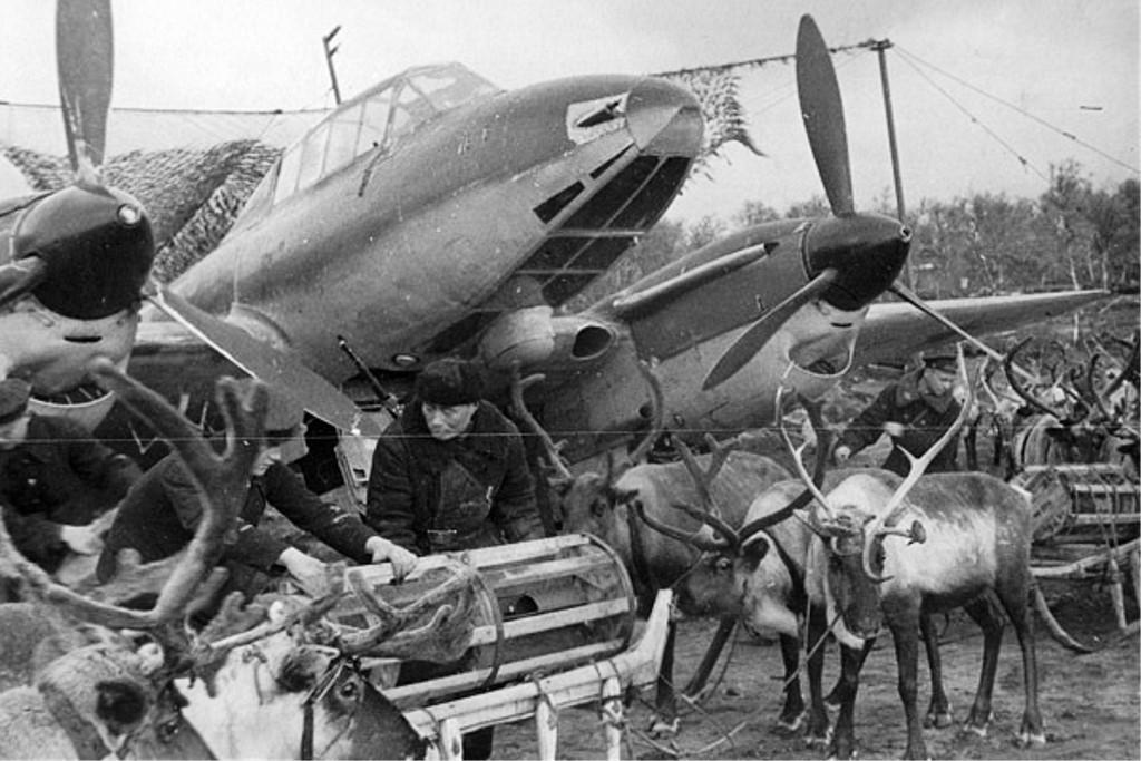 Во время Великой Отечественной войны в Красной армии оленей использовали для доставки боеприпасов.
